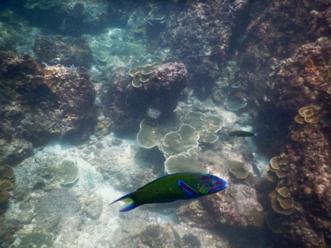 Parrotfish Diving Ao Nang